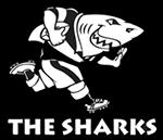 Acquista Maglia Sharks Rugby 2016 Home replica